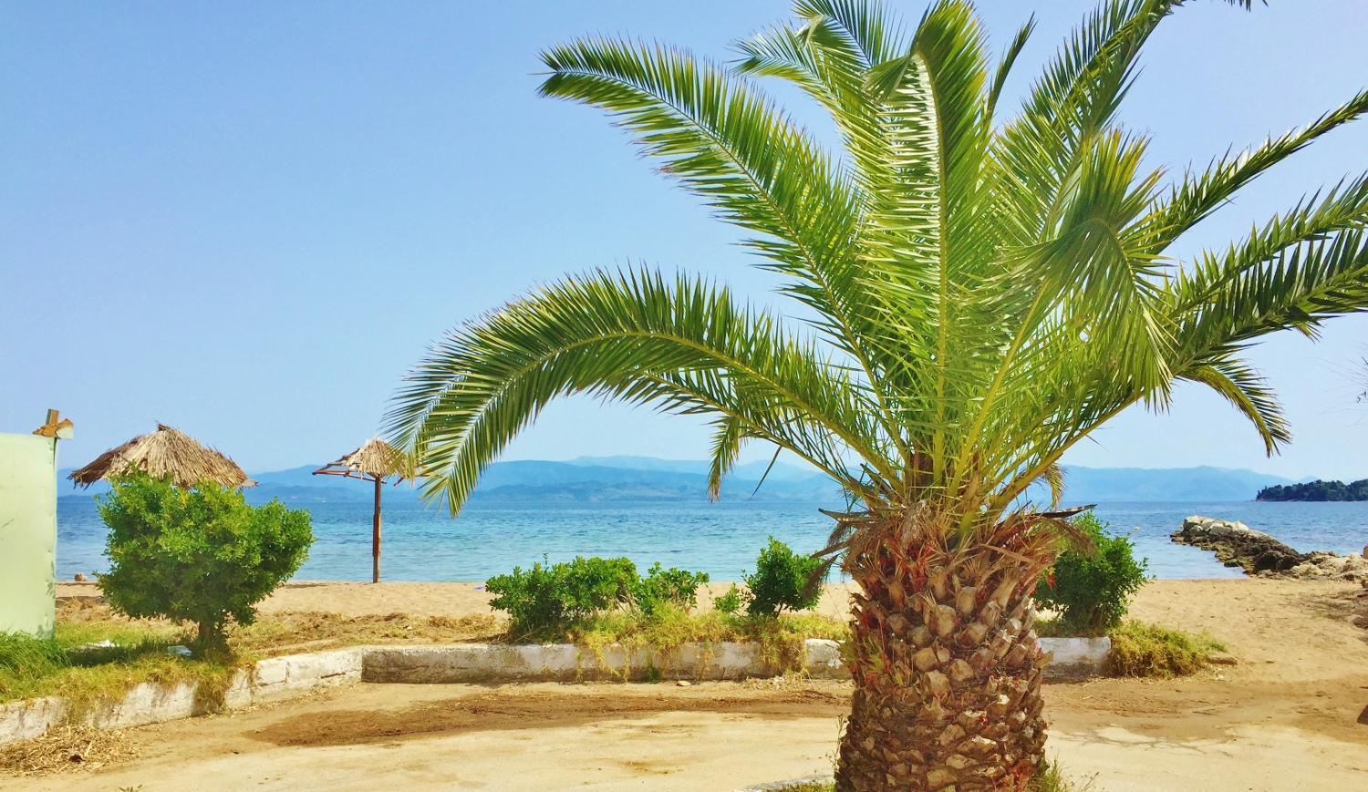 Palm Tree on Beach in Corfu Gouvia 1500x869