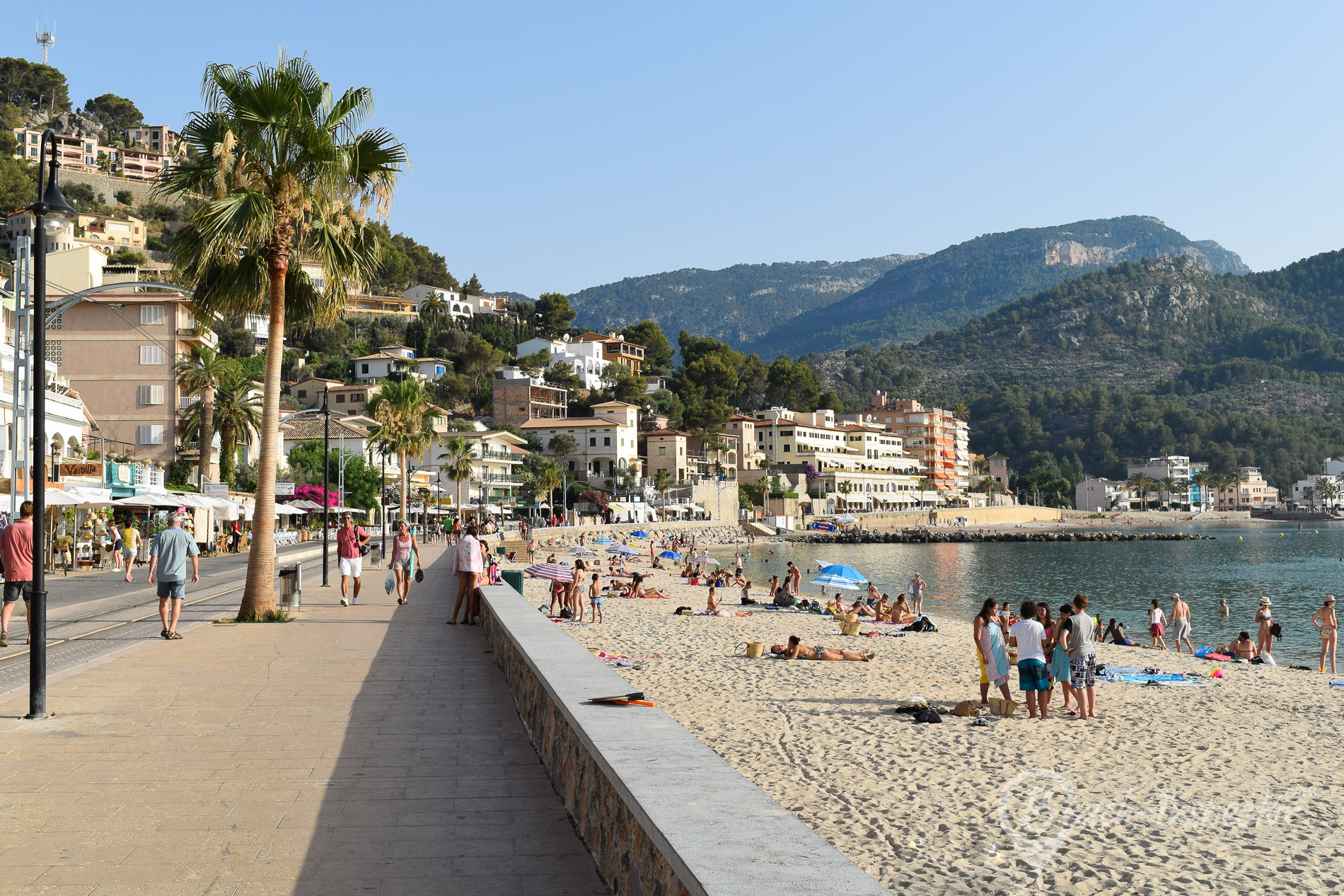 Soller – Mallorca Bird Watching