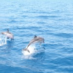 Dolphins in the Saronic
