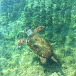 Swimming with turtles in Monemvasia